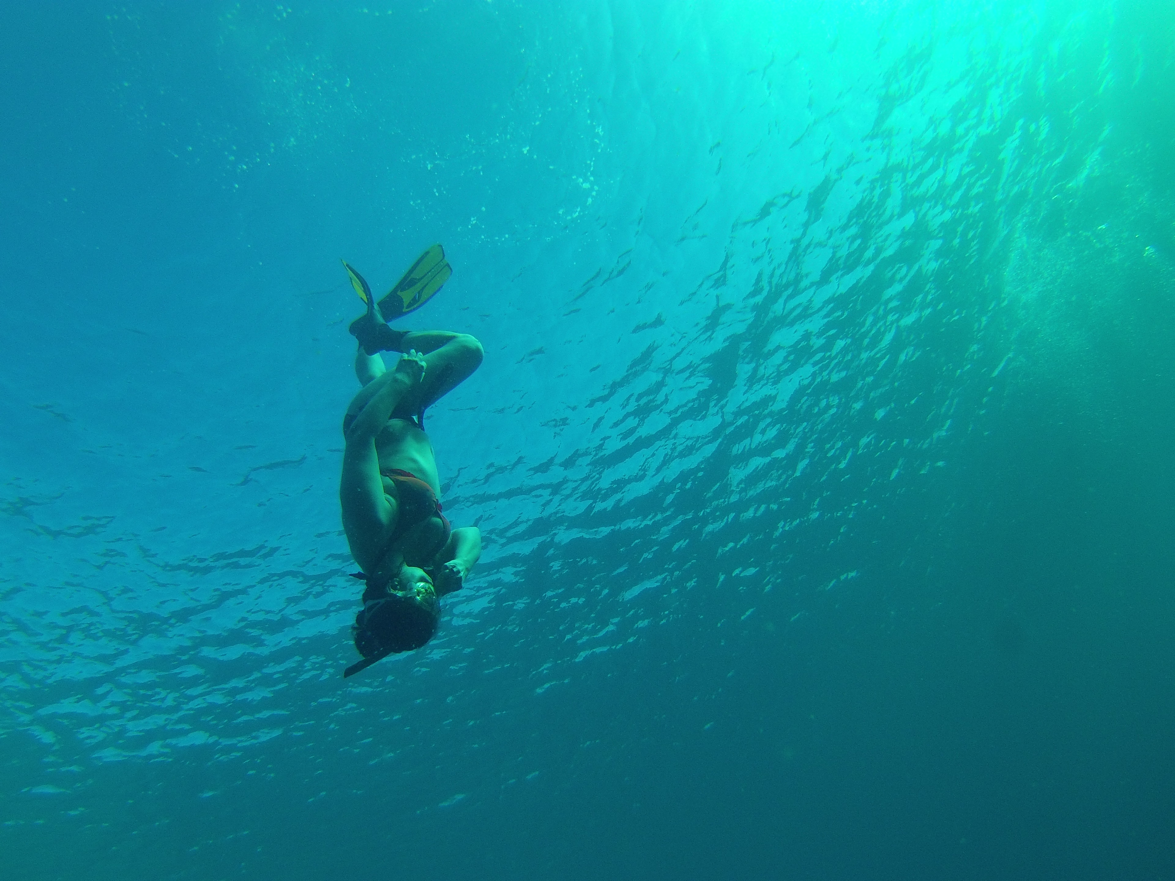 Free Diving With Carlos Coste In Bonaire